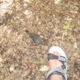 Pecking_bird