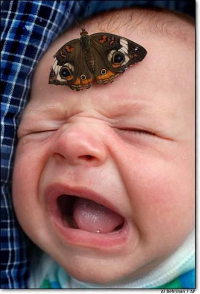 babybutterfly.jpg