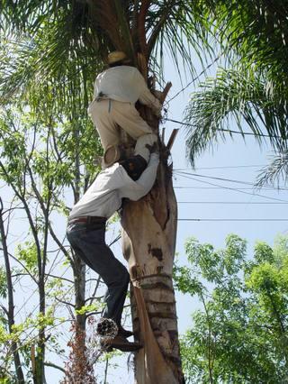 Tree_climbers_2