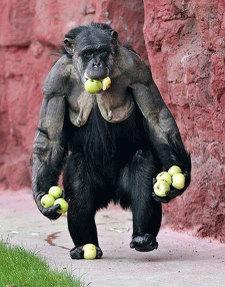 Famous_monkeys