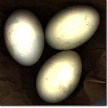 Balut_egg