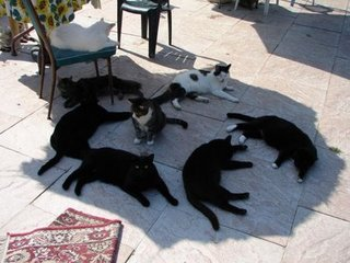 Cats_in_the_sun
