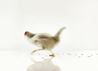 Chicken_without_head