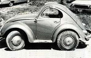 Short_beetle