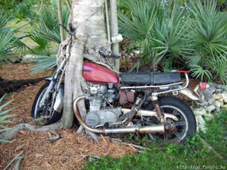 A_banana_bike