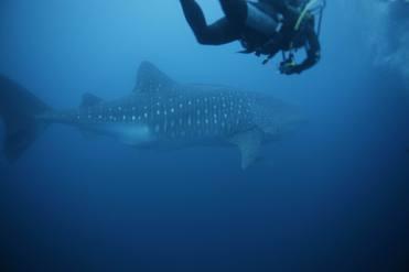 Galapagos_diving