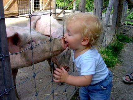 Kissing_pig