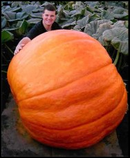 Pumpkin_beer