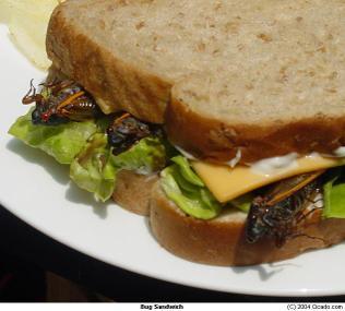 Bug_sandwich