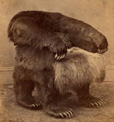 Grizzly_bear_chairs