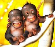 10_monkeys