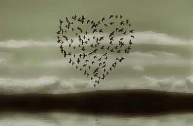 A_flock_of_birds