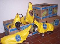 Banana_dogs