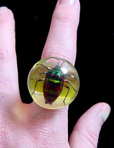 Beetle_ring