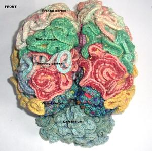 Brain_knit