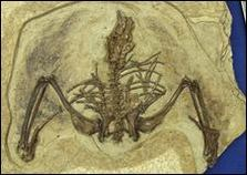 Chinese_fossil