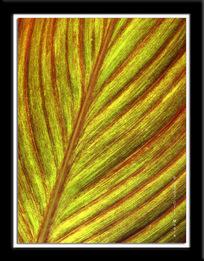 Green_leaf_1