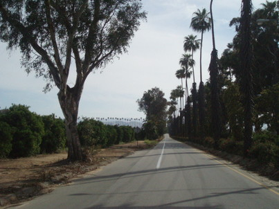 The old victoria ave where the last few orange groves remained