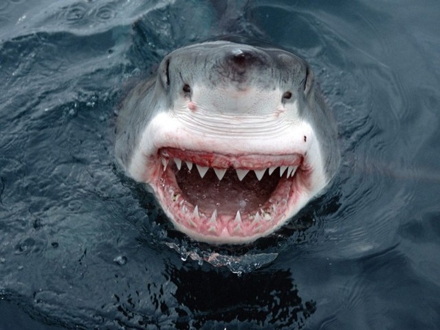 shark attacks in hawaii. The Jersey Shore shark attacks