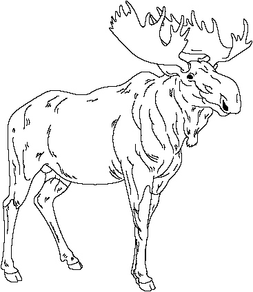 moose track coloring pages - photo#2